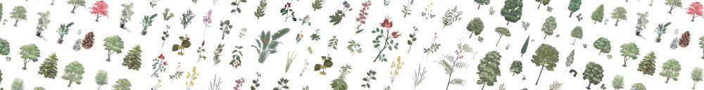 Procreate Plants Illustration Digital Drawing